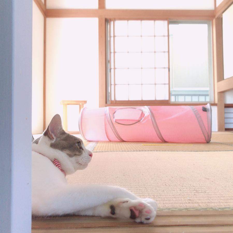 猫の夏バテ対策 猫 食欲低下