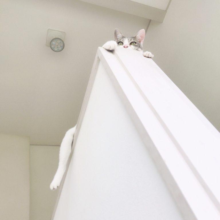 ねこつき一戸建て 多頭飼い猫 猫の夏バテ対策