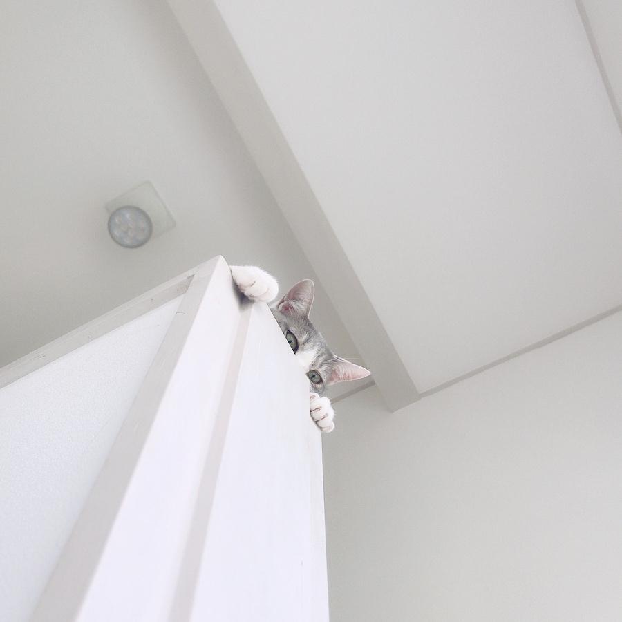 猫との暮らし 猫を飼いたい