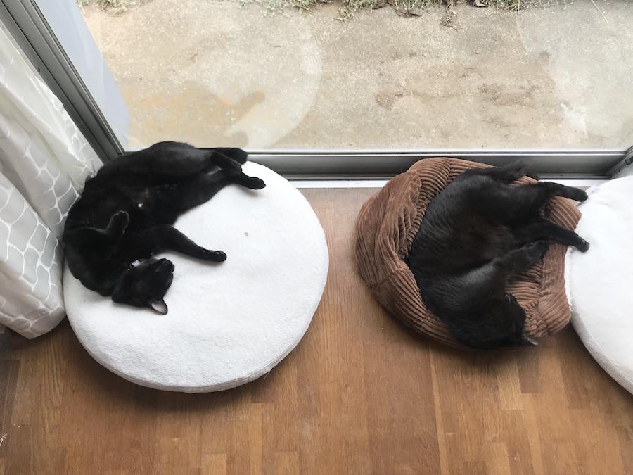 多頭飼い猫 朝の猫の様子