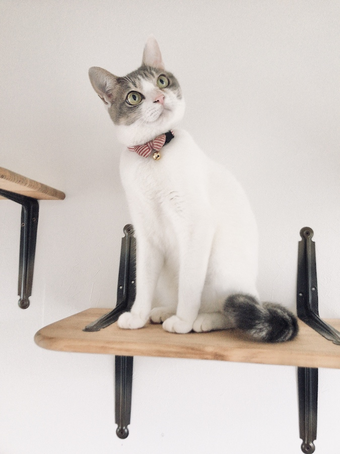 ねこつき一戸建て 多頭飼い猫 自作キャットステップ