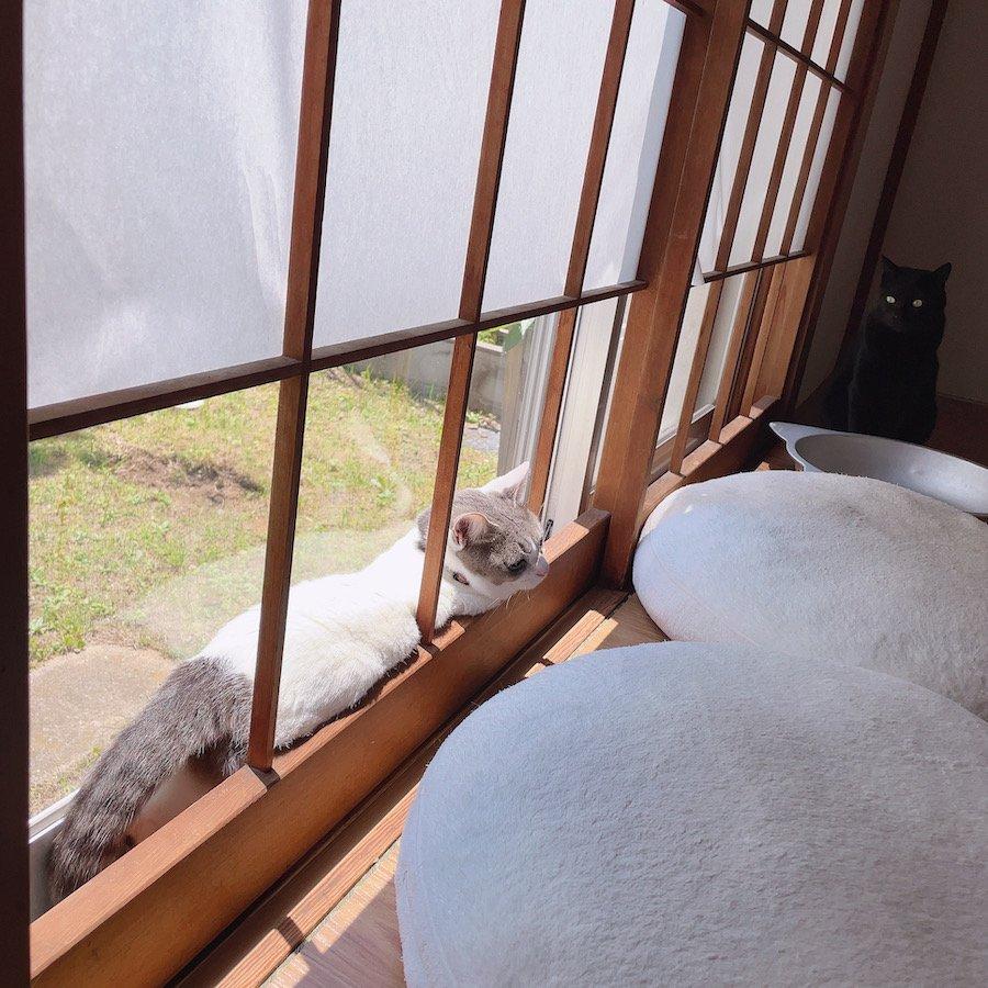 隙間好き猫 多頭飼猫 猫との暮らし 障子が破ける 問題