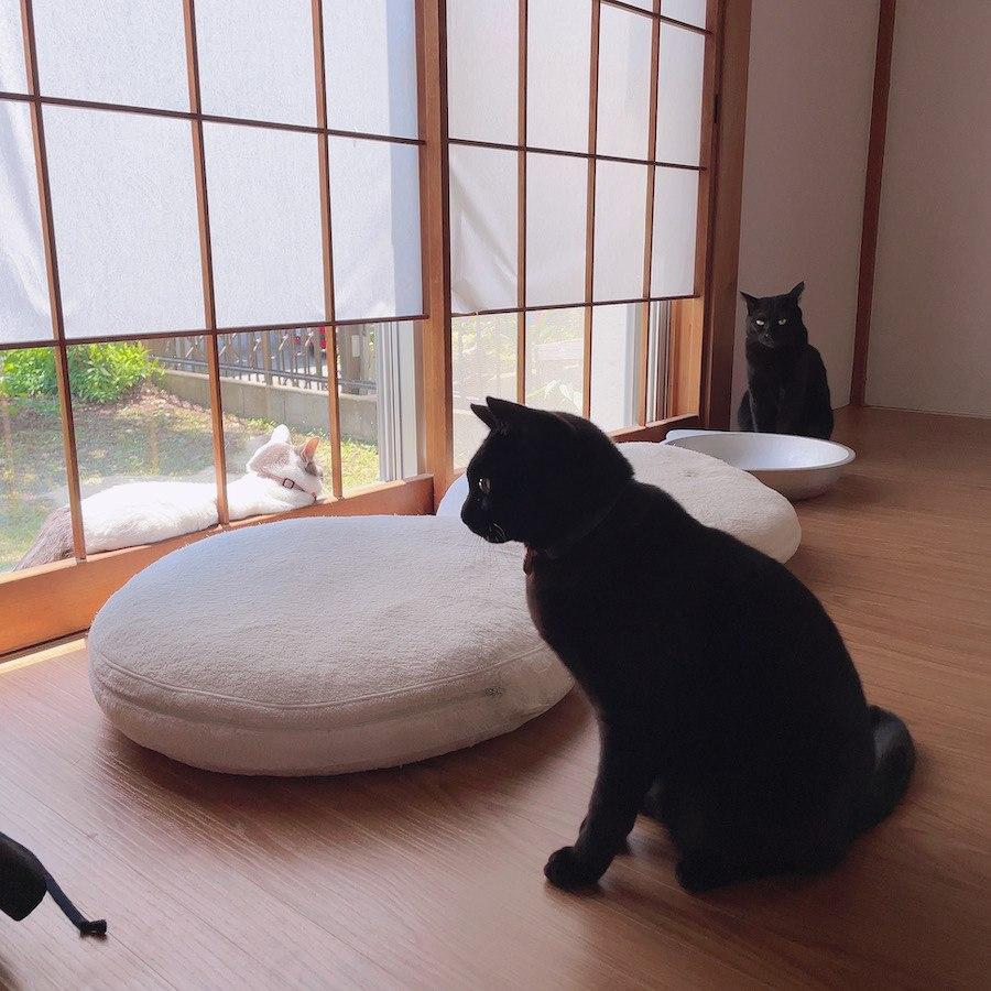 多頭飼猫 猫との暮らし 障子が破ける 問題