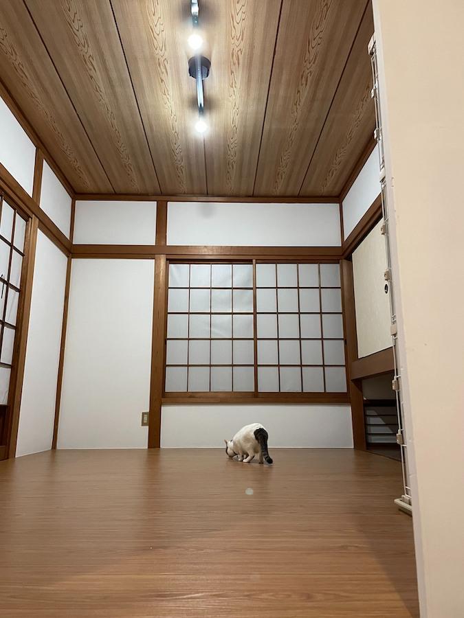 和室をフローリングに 簡単リフォーム ウッドカーペット 江戸間 6畳用 レビュー