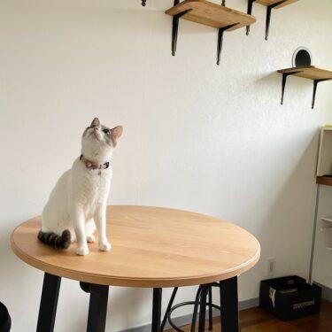 IKEAで通販 猫カフェ作り 「おうちカフェ」