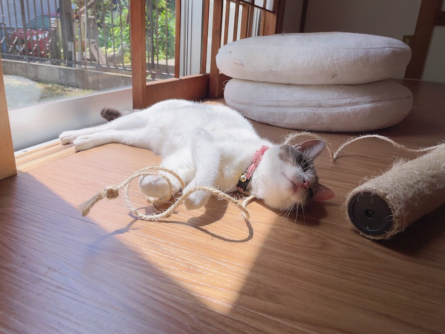 猫との暮らし ウッドカーペット お薦め 猫ちゃん大喜び