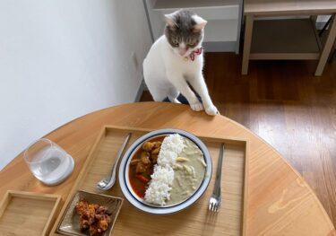 にゃんこに狙われるランチ 猫カフェ おうちごはん